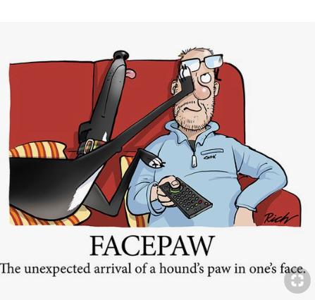 hound face paw